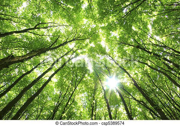 Árboles verdes de fondo - csp5389574