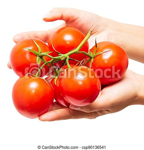 plano de fondo, blanco rojo, mano, tomates, ramo - csp90136541