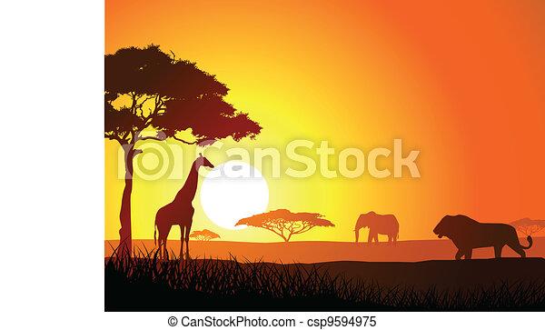 Safari - csp9594975