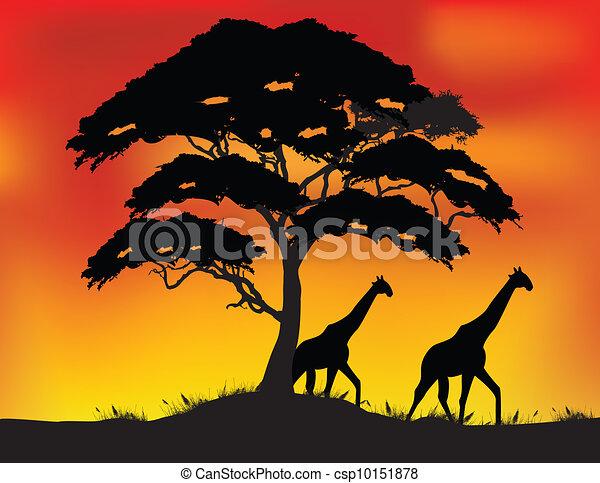 Safari - csp10151878