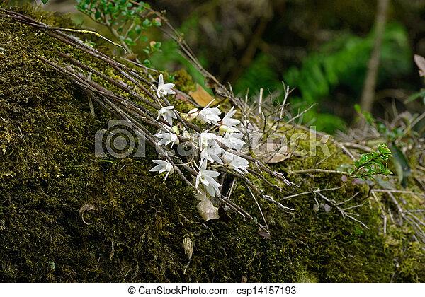 Planta de epifito - csp14157193