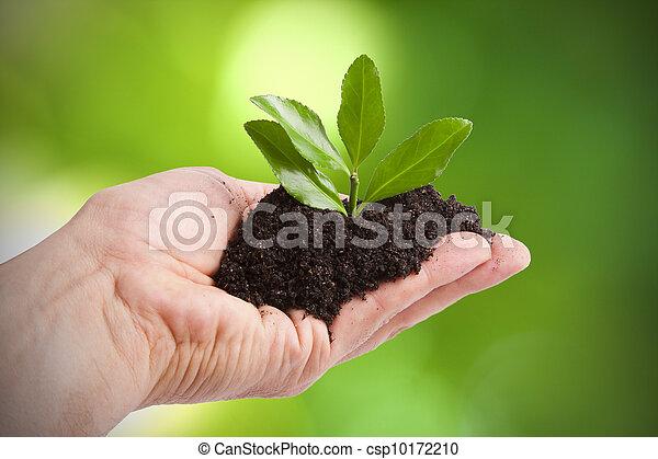 Joven árbol para plantar por hombre, Ecología y Medio Ambiente - csp10172210