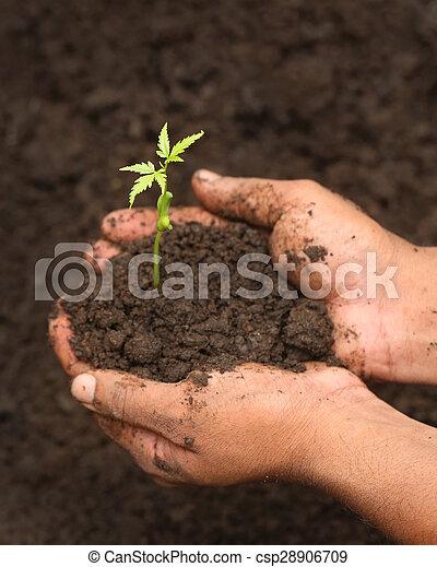 Planta medicinal tierna - csp28906709