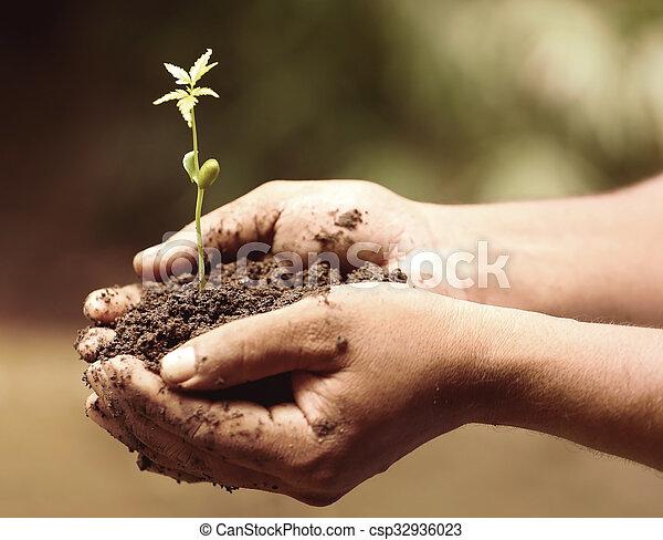 Planta medicinal tierna - csp32936023