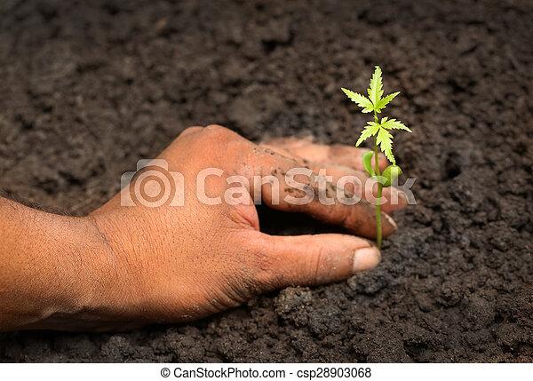 Planta medicinal tierna - csp28903068