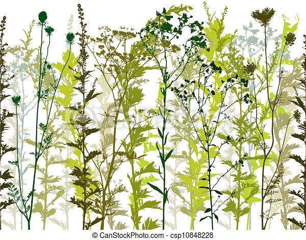 Plantas silvestres naturales y malas hierbas. - csp10848228