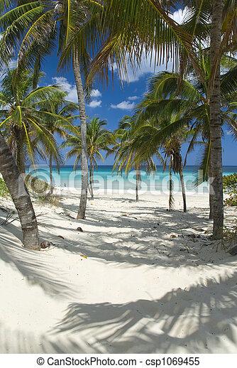 Playa - csp1069455