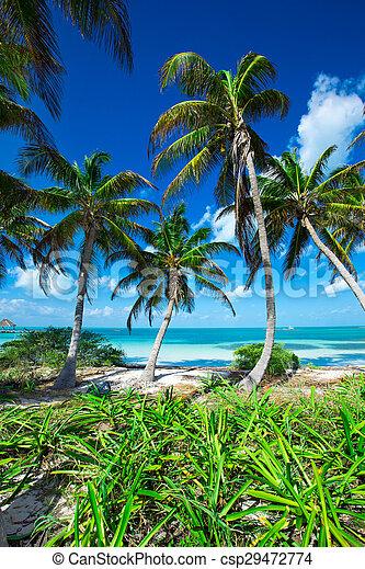 Playa - csp29472774