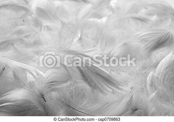 Plumas de fondo - csp0709863