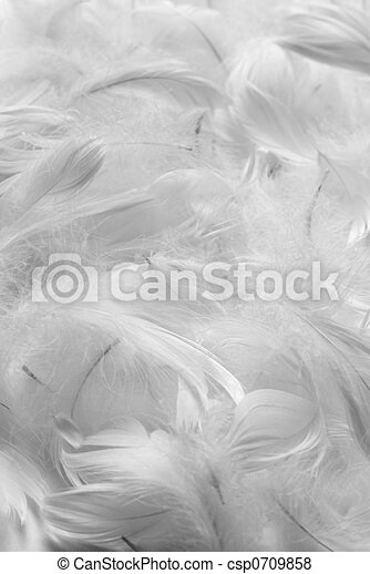 Plumas de fondo - csp0709858