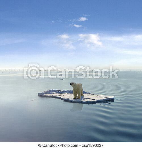 El último oso polar - csp1590237