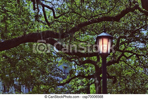 Polvo en el parque Savannah - csp70006568
