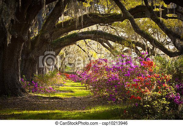 La plantación Charleston SC vive en los robles, el musgo español, las flores de azalea florecen en primavera - csp10213946