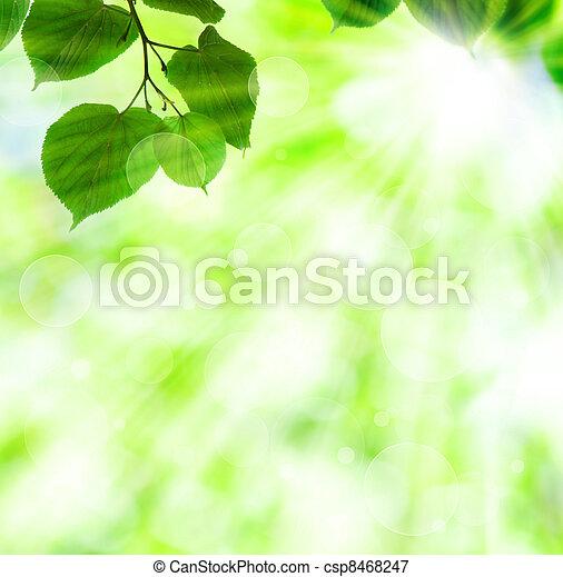 Un rayo de sol primavera con hojas verdes - csp8468247