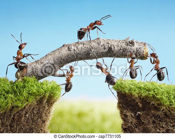 Equipo de hormigas construyendo puente, trabajo en equipo - csp7731105