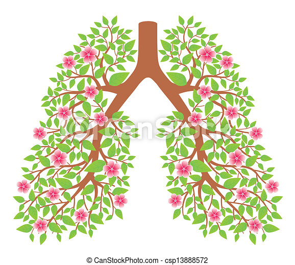 Pulmones sanos - csp13888572