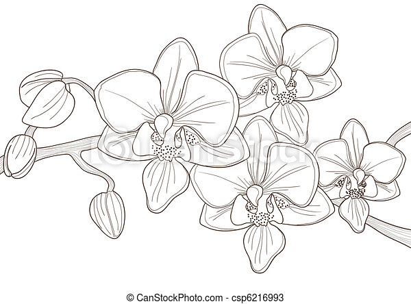Cretino de orquídea - csp6216993