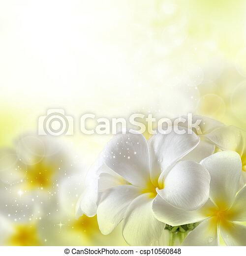 Bouquet de flores de ciruelas - csp10560848
