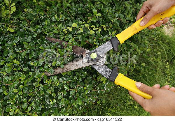 Recortando arbustos con tijeras de jardín - csp16511522