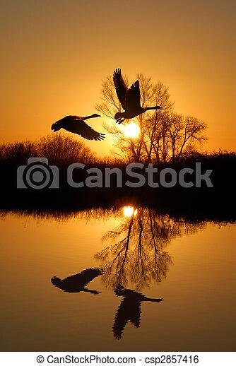 Reflexión de ganso y rústico - csp2857416