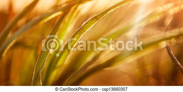 Abstraer el pasto - csp13660307