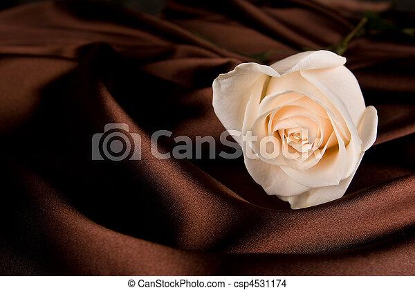Rosa blanca en seda marrón - csp4531174