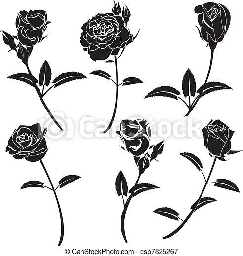 Flor de rosa - csp7825267