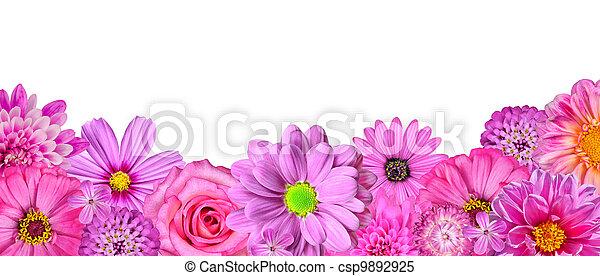 Selección de varias flores blancas rosas en la fila inferior, aisladas - csp9892925