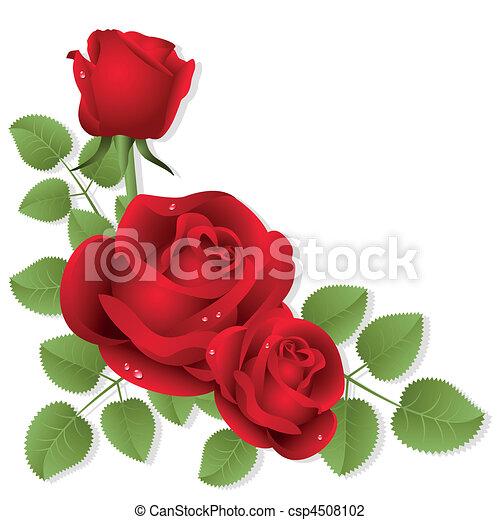 Rosas - csp4508102