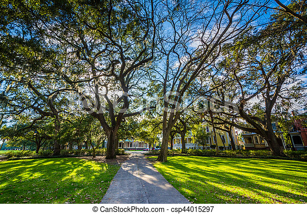 sabana, parque, musgo, georgia., forsyth, sendero, español, árboles - csp44015297