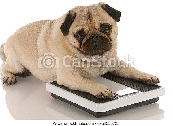 Salud de los animales. Perros lindos que están en escalas de peso - csp2555725