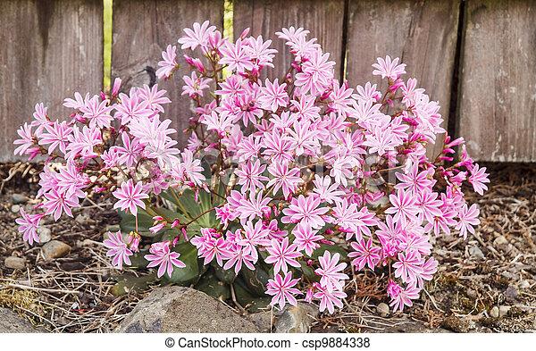 Salvaje arbusto rosado - csp9884338