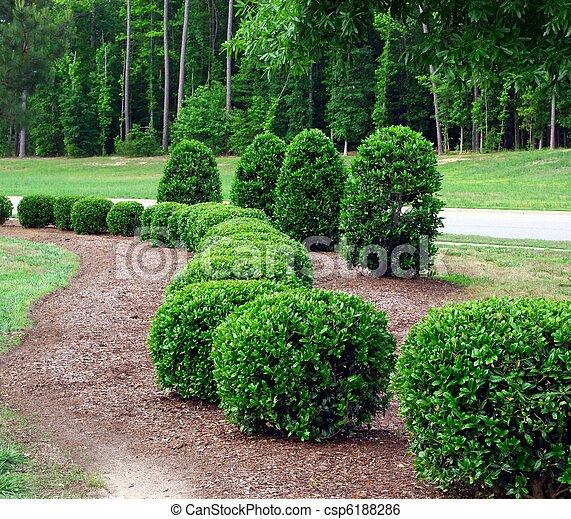 Shrubs y arbustos - csp6188286