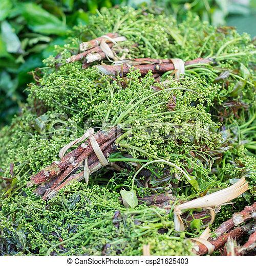 Siamese neem árbol en el mercado local, - csp21625403