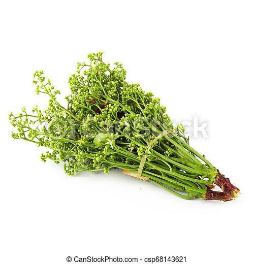 Siamese neem árbol, Nim, Margosa aislada en el fondo blanco. - csp68143621