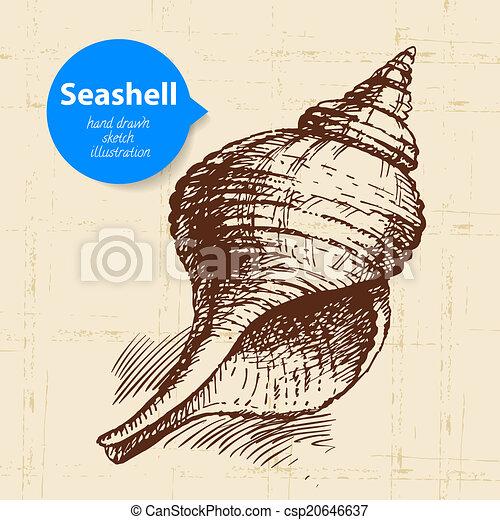 Dibujo de concha de caracol. Una ilustración antigua - csp20646637