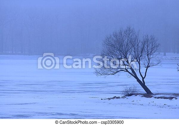 Un solo árbol en invierno - csp3305900