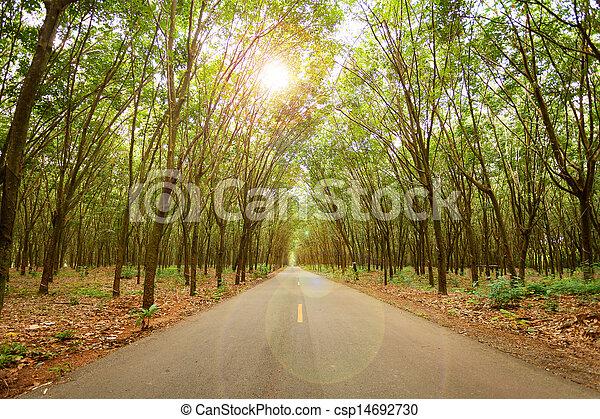 El túnel del árbol de goma en la carretera - csp14692730