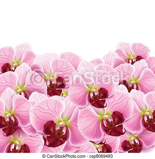 Orquídeas, tarjeta de felicitación - csp8069493