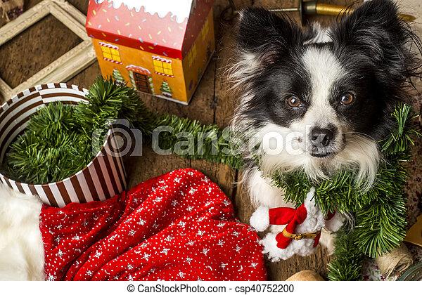 Tarjetas de Navidad de perros - csp40752200