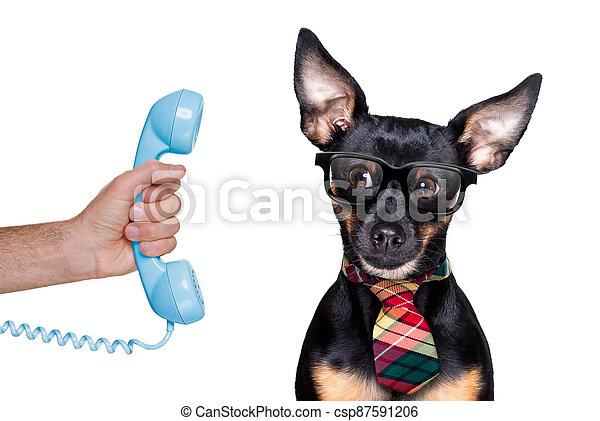 teléfono, o, perro, teléfono - csp87591206