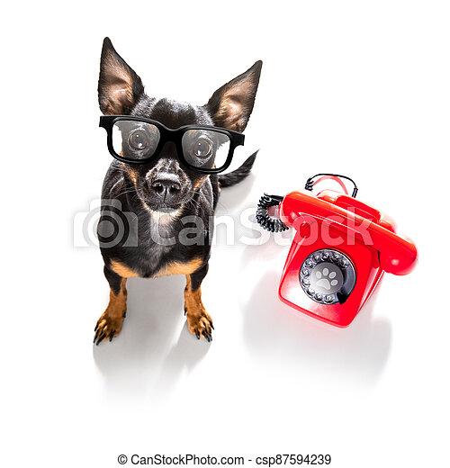 teléfono, o, perro, teléfono - csp87594239