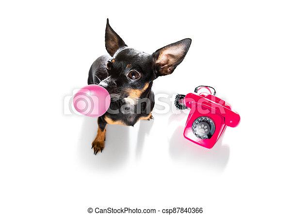 teléfono, o, teléfono, perro - csp87840366