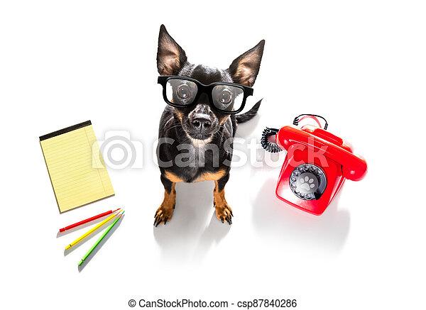 teléfono, o, teléfono, perro - csp87840286