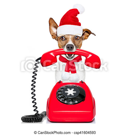 Perro en el teléfono de Navidad sombrero de Santa - csp41604593