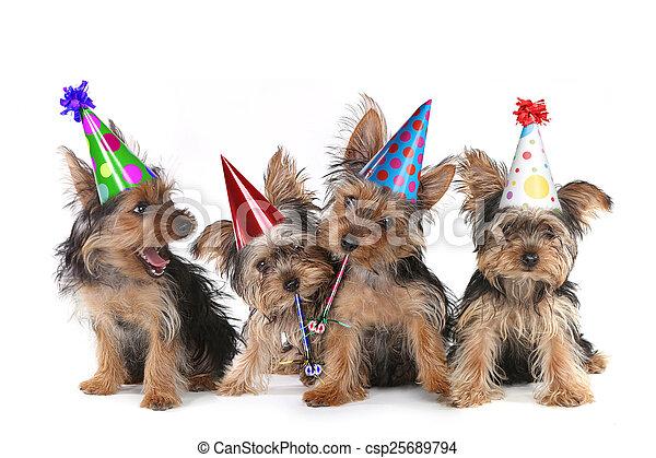 Tema de cumpleaños terrier terrier cachorros en blanco - csp25689794