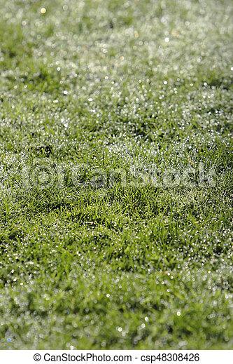 Textura de hierba verde - csp48308426