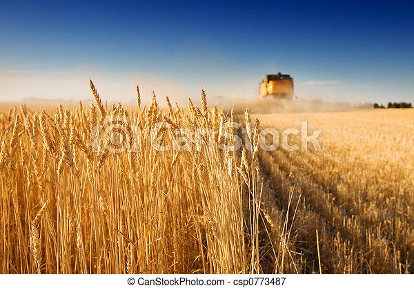 Tiempo de cosecha - csp0773487