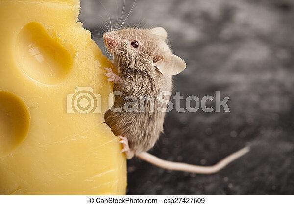Trasfondo de ratón, tema rural vívido y colorido - csp27427609