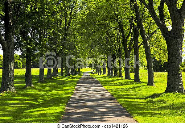 Camino en parque verde - csp1421126